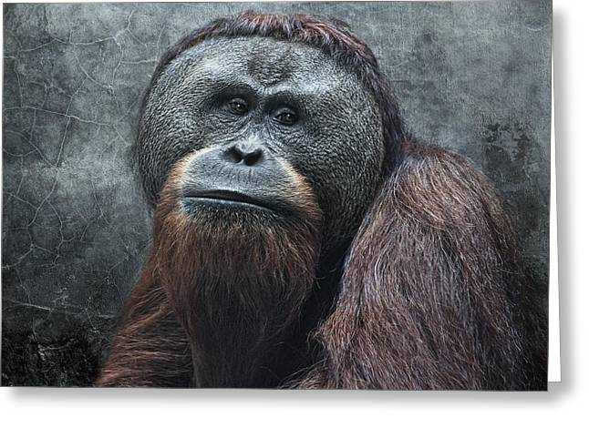 Orang-utans Greeting Cards - The Patriarch Greeting Card by Joachim G Pinkawa