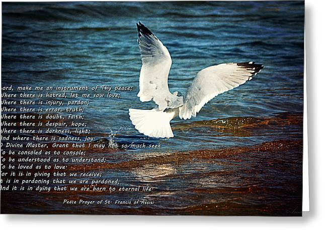 Sea Birds Greeting Cards - The Peace Prayer Of St. Francis Greeting Card by Maria Angelica Maira
