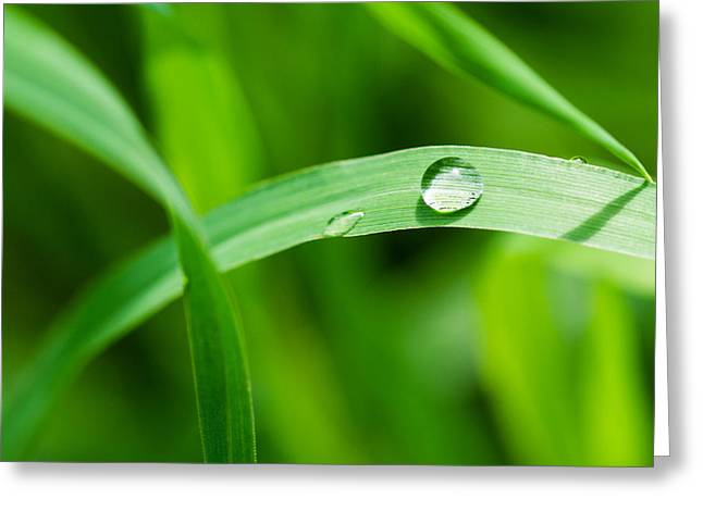 Herbage Greeting Cards - The Pearl - Featured 3 Greeting Card by Alexander Senin