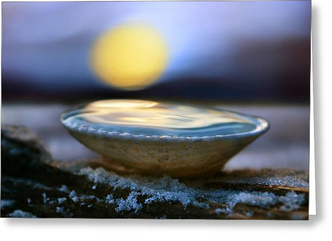 Laura Fasulo Greeting Cards - The Pearl Greeting Card by Laura  Fasulo