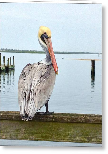 Pelicans Over Ocean Greeting Cards - The Pelicans Bay Greeting Card by Kari Watson
