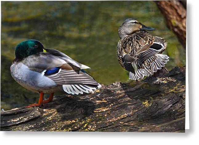 The Perfect Mallard Couple Greeting Card by Sandi OReilly
