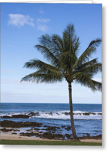 Sharks Cove Greeting Cards - The Perfect Palm Tree - Sunset Beach Oahu Hawaii Greeting Card by Brian Harig