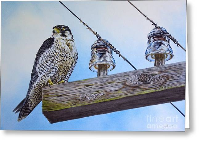 Peregrine Falcon Greeting Cards - The Perfect Predator Greeting Card by Greg Halom