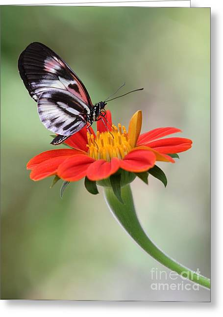 The Piano Key Butterfly Greeting Card by Sabrina L Ryan