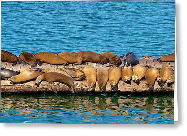 Sea Lions Greeting Cards - The Pier Greeting Card by Richard J Cassato