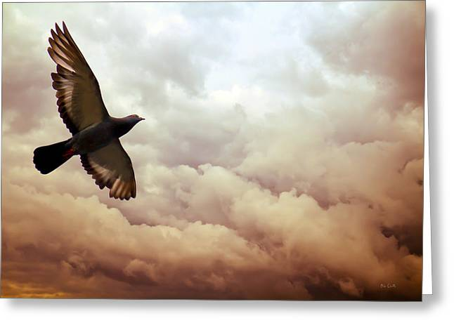 Meditate Greeting Cards - The Pigeon Greeting Card by Bob Orsillo