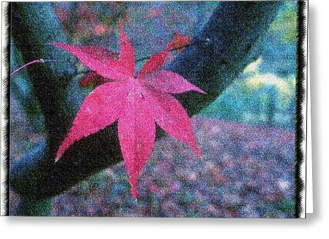 Mario Carini Paintings Greeting Cards - The Pink Colors of Autumn Greeting Card by Mario Carini