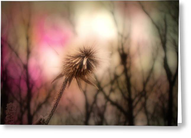 Soft Light Digital Art Greeting Cards - The Pink Light Greeting Card by Gothicolors Donna Snyder