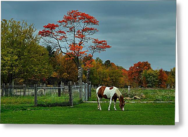 Horse Images Greeting Cards - The Pinto Greeting Card by Julie Dant