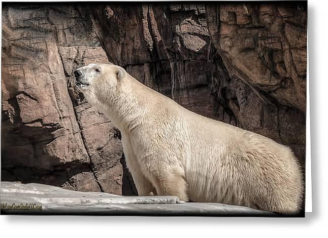 Mammals Greeting Cards - The Polar Bear Greeting Card by LeeAnn McLaneGoetz McLaneGoetzStudioLLCcom