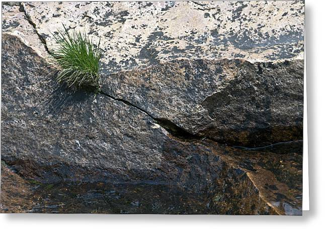 Geology Photographs Greeting Cards - The Polished Granite Banks Of The Merced River In Lyell Canyon Greeting Card by Scott Lenhart