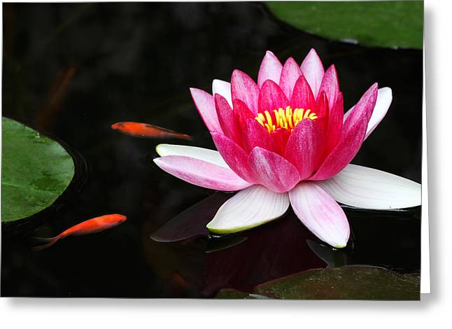 Water Lilly Greeting Cards - The Pond III Greeting Card by Barnaby Chambers