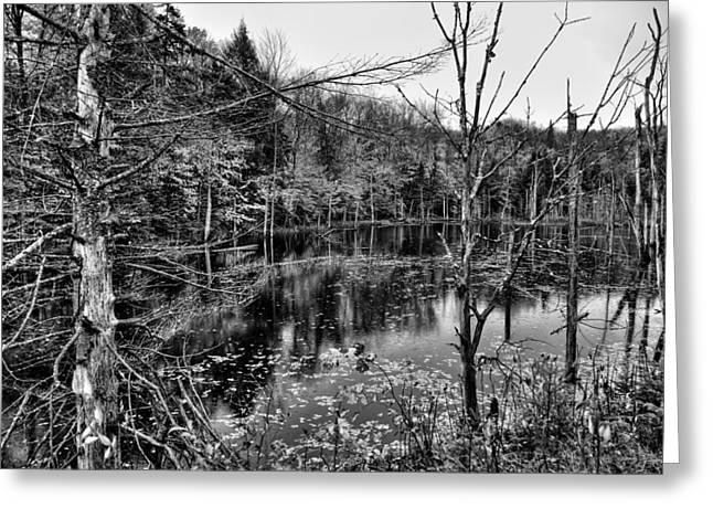Old And New Greeting Cards - The Pond on Limekiln Road Greeting Card by David Patterson