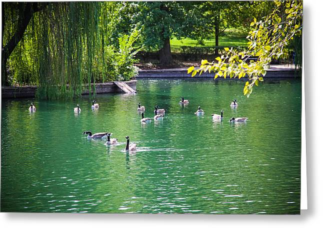 Wadding Greeting Cards - The Pond Greeting Card by Tinjoe Mbugus