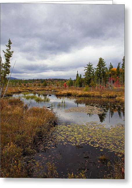 Fir Trees Greeting Cards - The Ponds near Raquette Lake Greeting Card by David Patterson