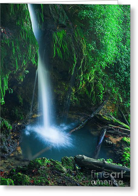 Kentucky Greeting Cards - The Pool Greeting Card by Wayne Stacy