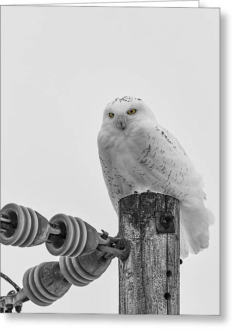Glowing Eyes Greeting Cards - The Power Of The Owl Black and White Greeting Card by Thomas Young