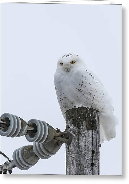 Snowy White Owl Greeting Cards - The Power Of The Owl Greeting Card by Thomas Young