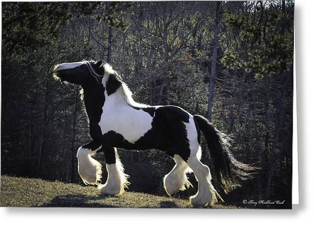 Gypsy Vanner Horse Greeting Cards - The Prancing Stallion Greeting Card by Terry Kirkland Cook