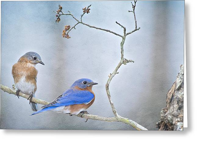 Presence Greeting Cards - The Presence of Bluebirds Greeting Card by Bonnie Barry
