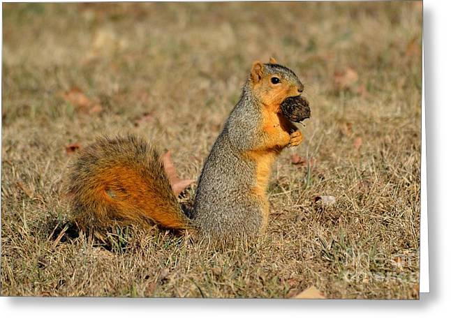 Fox Squirrel Greeting Cards - The Prize Greeting Card by Charles Trinkle