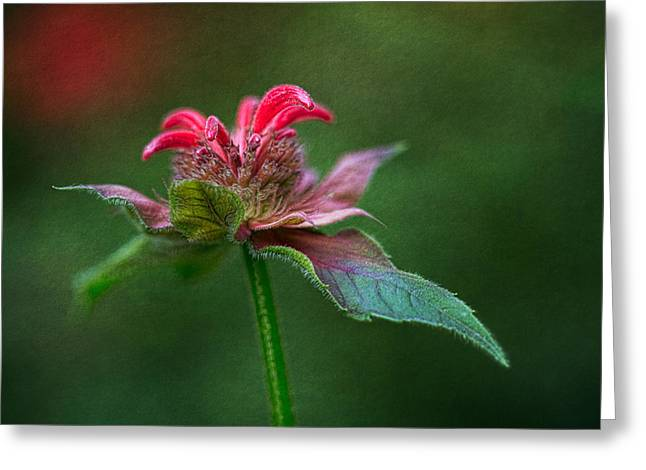 Balm Greeting Cards - The Promise Of Beauty Greeting Card by Dale Kincaid