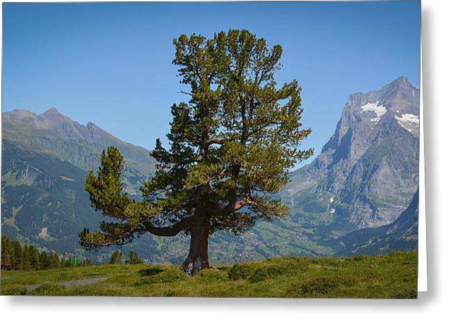 Stefan Hoareau Greeting Cards - The proud tree Greeting Card by Stefan Hoareau