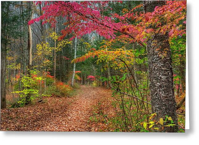 Woodland Scenes Greeting Cards - The Psychedelic Forest Square Greeting Card by Bill  Wakeley