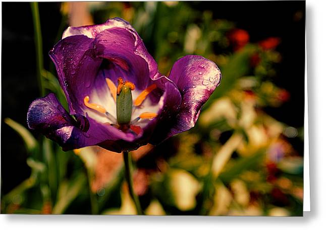 D700 Greeting Cards - The Purple Rose of Cairo Greeting Card by Chris Modlin