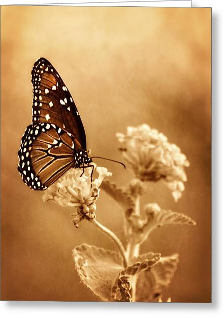 Queen Butterfly Greeting Cards - The Queen Butterfly  Greeting Card by Saija  Lehtonen