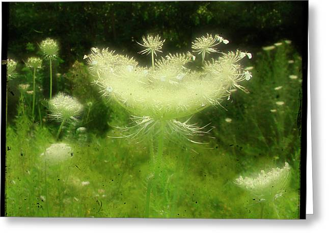 Soft Light Digital Art Greeting Cards - The Queen in fields Greeting Card by Gothicolors Donna Snyder