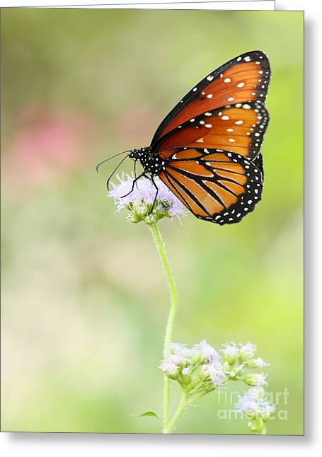 Flowers Miami Greeting Cards - The Queen in Spring Greeting Card by Sabrina L Ryan