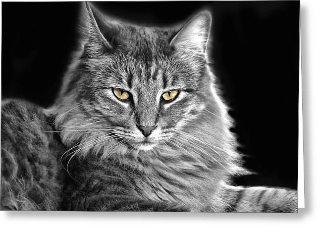 Grumpy Face Greeting Cards - The Queen Is Not Amused Greeting Card by Carolyn Fletcher