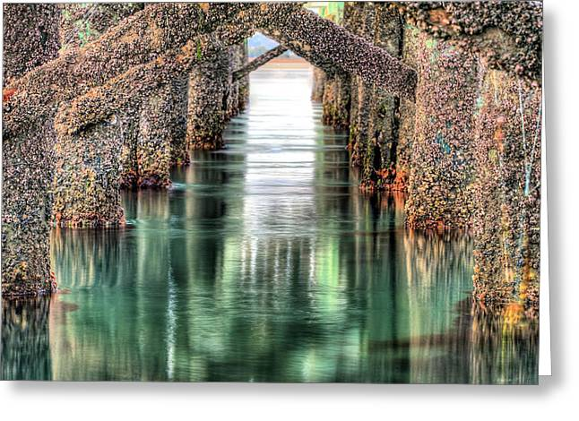 Wrightsville Beach Greeting Cards - The Quiet of Green Greeting Card by JC Findley