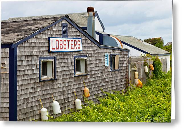 The Quintessential Lobster Experience Greeting Card by Michelle Wiarda