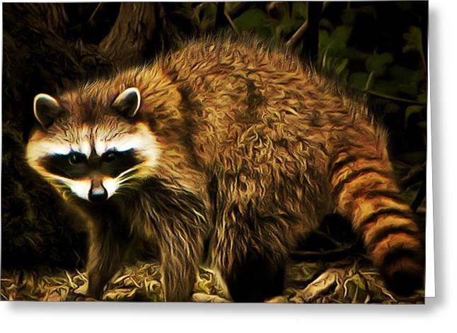Raccoon Digital Art Greeting Cards - The Raccoon 20150215brun square Greeting Card by Wingsdomain Art and Photography