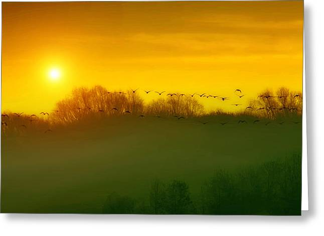 Rural Images Greeting Cards - The Race Home Greeting Card by Tom York Images