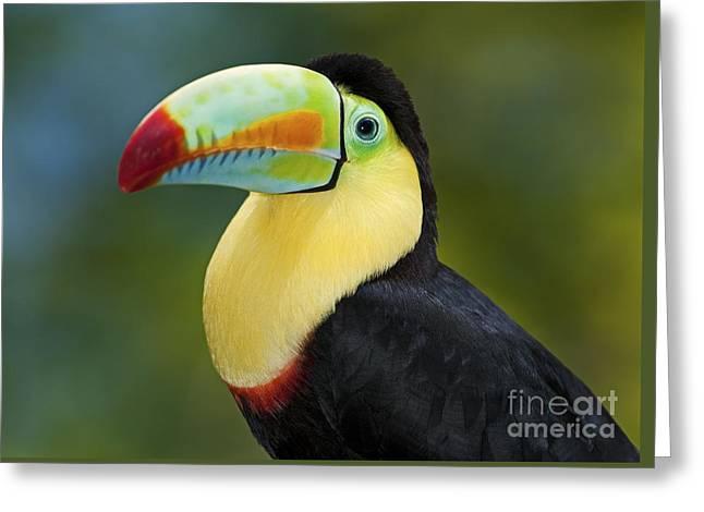Festblues Greeting Cards - The Rainbow Bird.. Greeting Card by Nina Stavlund