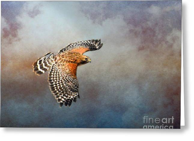 Red Shouldered Hawk Greeting Cards - The Raptors Flight Greeting Card by Jai Johnson