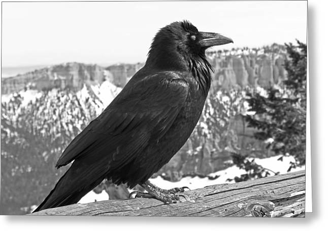 Crow Greeting Cards - The Raven - Black and White Greeting Card by Rona Black