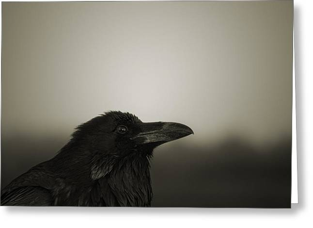 Warm Tones Greeting Cards - The Raven Greeting Card by Dave Gordon