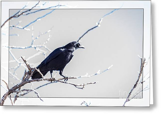 Mystical Landscape Greeting Cards - The Raven Greeting Card by Janice Rae Pariza