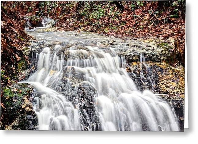 Falling Water Creek Greeting Cards - The Real Florida Greeting Card by JC Findley