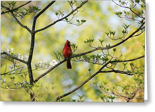 Zen Pyrography Greeting Cards - The Red Cardinal Greeting Card by Valia Bradshaw