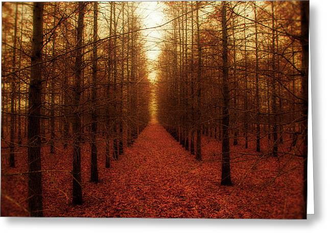 Forests Greeting Cards - The Red Forest Greeting Card by Amy Tyler