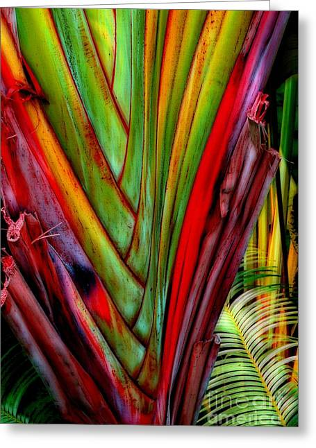 The Red Jungle Greeting Card by Joseph J Stevens