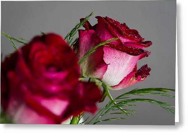 The Red Rose Greeting Card by Andreas Levi