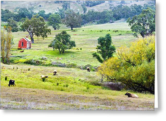 Cattle-shed Digital Art Greeting Cards - The Red Shed Greeting Card by Sharon Greenaway