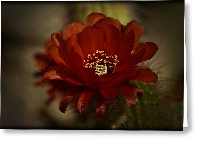 Torch Cactus Greeting Cards - The Red Torch  Greeting Card by Saija  Lehtonen